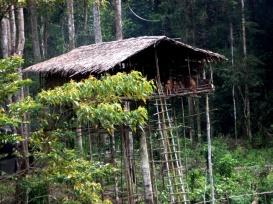 Koroway tree house