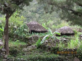 Traditional Dani Houses