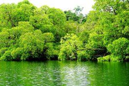 bird watching in the mangrove - West Papua