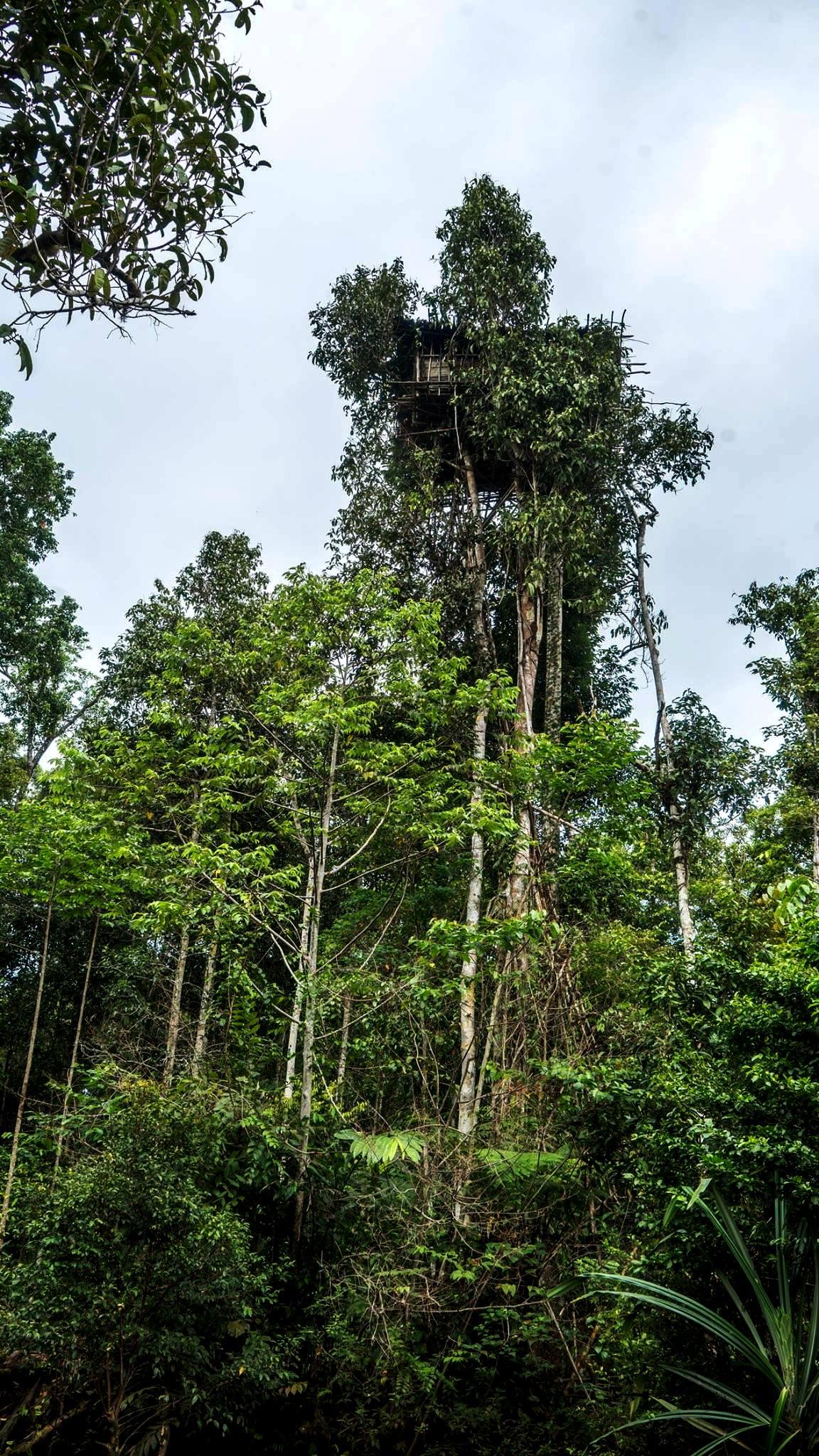 Picture of: Korowai Tree House Baliem Valley Festival 2020 Jefalgi Papua Tours