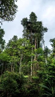 tree house of korowai
