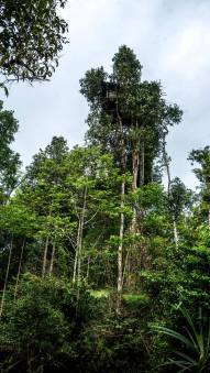 tree house of korowai
