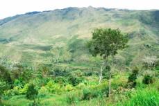 Dani plantation in baliem valley