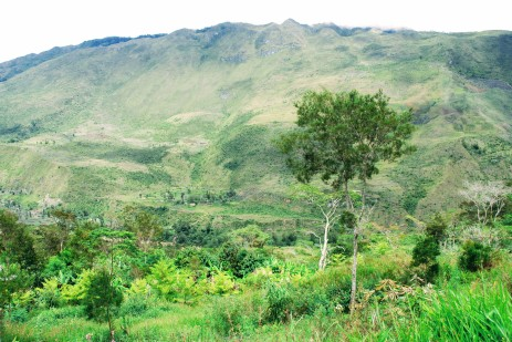 Dani plantation in baliem valley